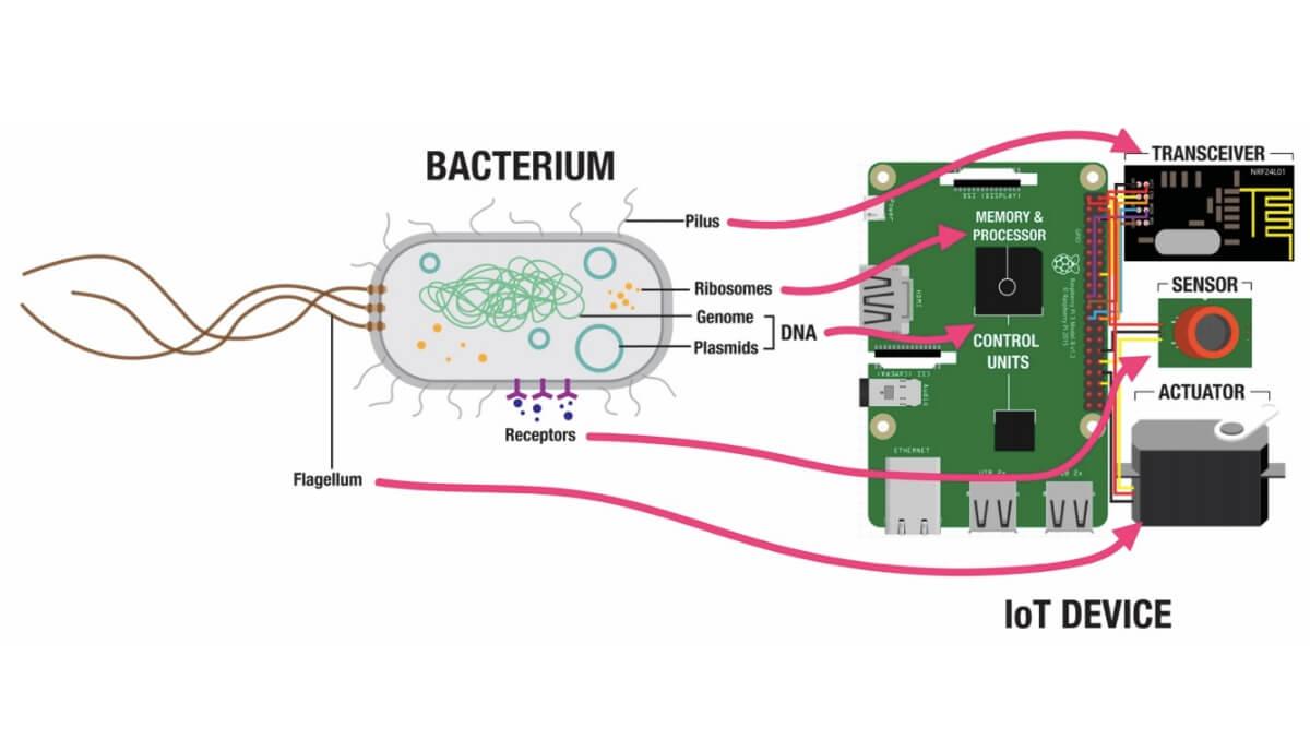 La Futura Raspberry Pi Podría Estar hecha de Bacterias